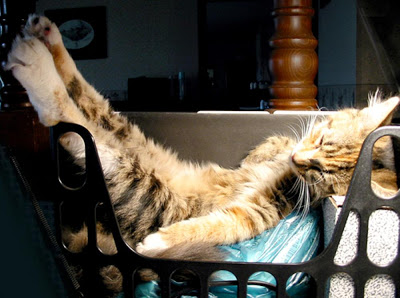 Cat Lounging in the Sun.jpg