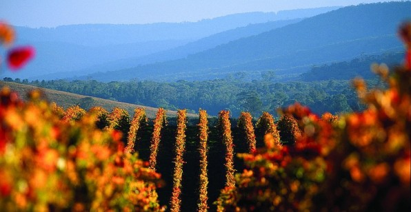 VineyardsYarraValley