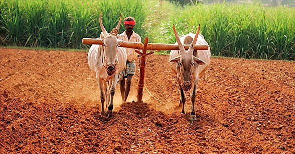 ploughing (1)