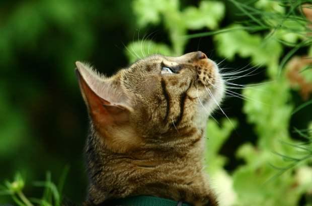 a cat like raoul.jpg