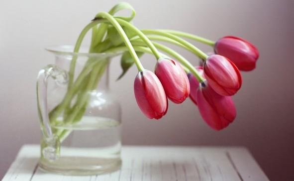 drooping tulips.jpg