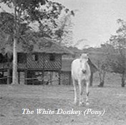 whitepony